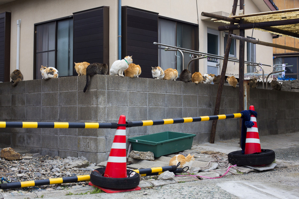 You could sit on this wall with these cats.