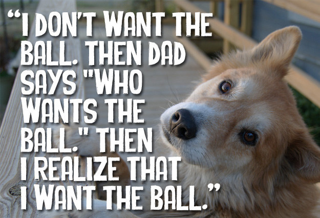 15 Everyday Thoughts Your Dog Almost Definitely Has
