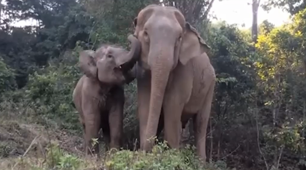 A Baby Elephant And Her Mother Had The Sweetest Reunion After Being Separated For Three Years