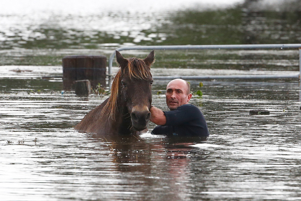 This Man Used A Surfboard To Rescue Horses From A Flood