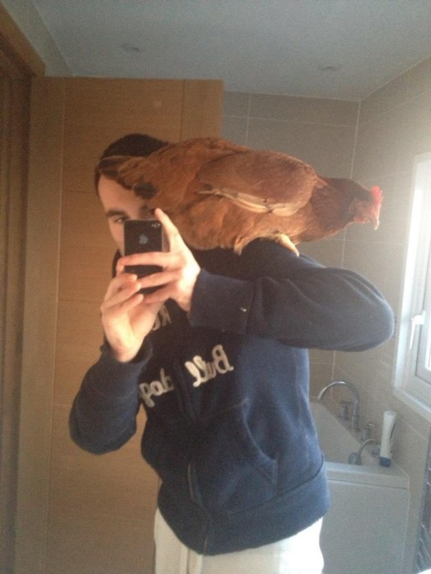 The Shoulder Chicken Is The Best Thing On The Internet Right Now