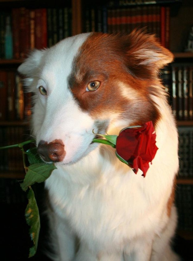 ...and OK, you're fine without a human date but it would nice to have a furry alternative. Your dog, for instance.
