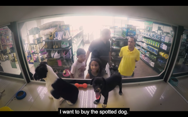 "And then they waited for customers try and buy one of the ""purebred"" animals in the store..."
