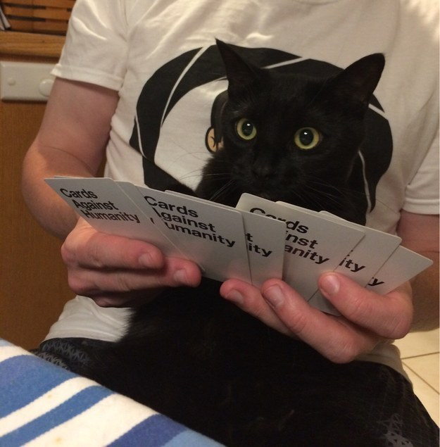 And this cat who is about to offend everyone in this game of Cards Against Humanity.