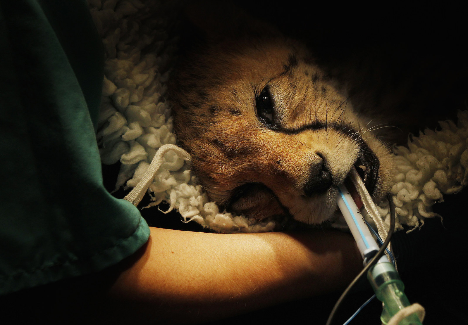 Arresting Photos Of Animals Being Nursed Back To Health In Hospitals Across The World