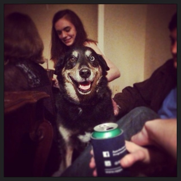 Awkward moments at a party situation call for a dog. Why not bring your own?