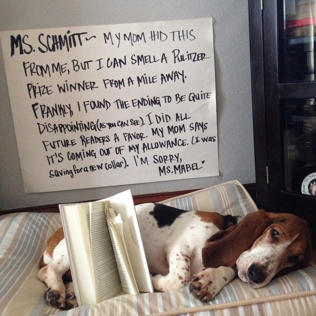 This Dog Just Sent The Cutest Apology To A High School Librarian