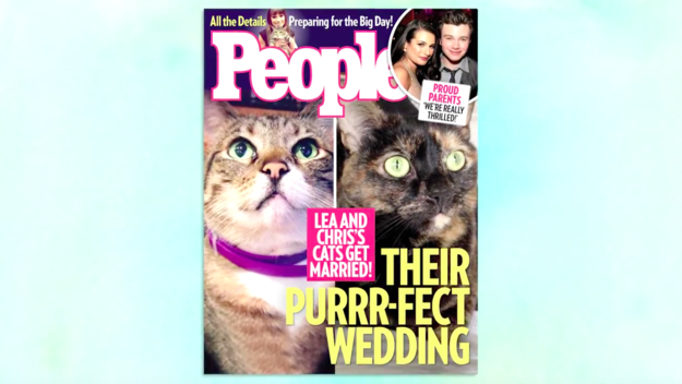 But she did announce that her cat and Chris Colfer's cat are getting married.