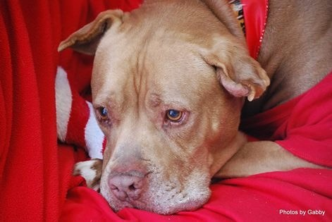 Chester the dog was found as a stray and taken into an animal shelter where he waited five years for a family to adopt him.