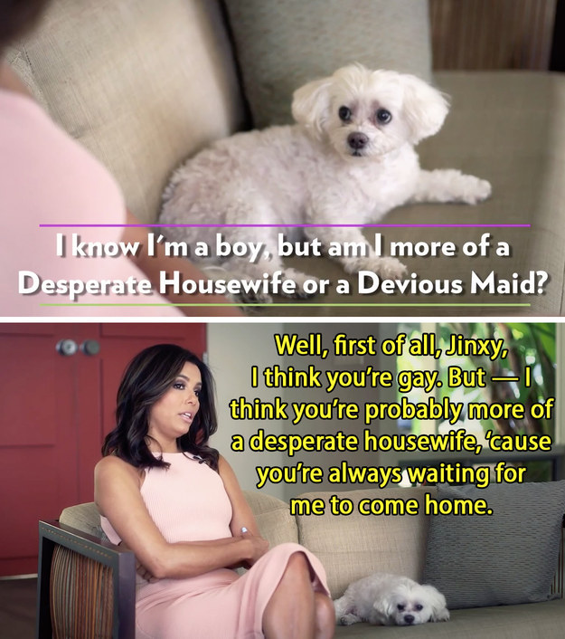 Eva Longoria outed her dog as gay in their interview.