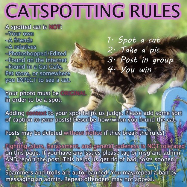 First, learn the rules of Catspotting: