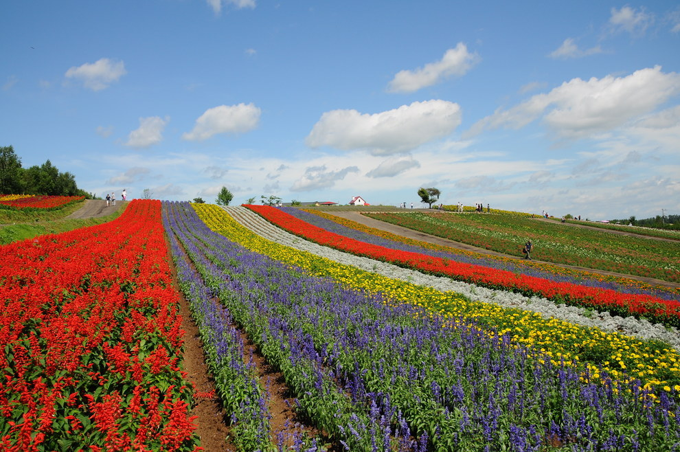 Flower gardens of Shikisai-no-oka, in Biei, Japan