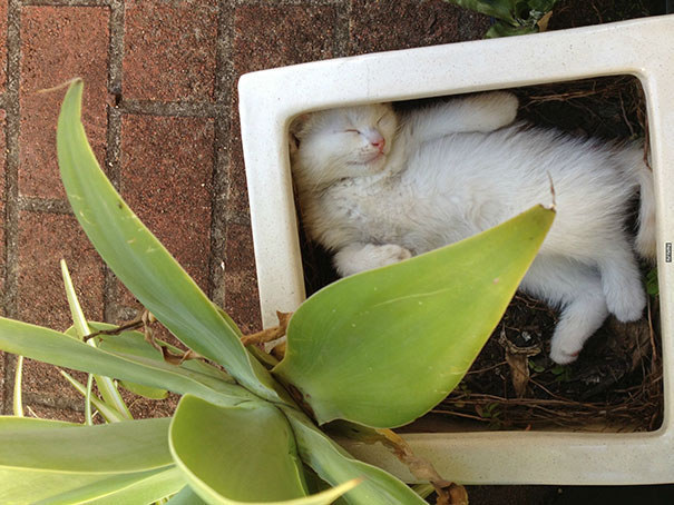 How To Grow A Cat Plant