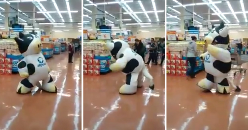 Give This Dancer In a Cow Suit a Raise