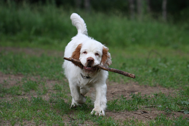 How Well Do You Know Dog Breeds