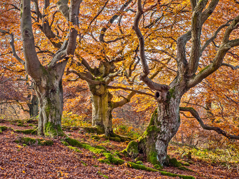 31 Reasons To Go Visit A Beech Tree Forest Right Now