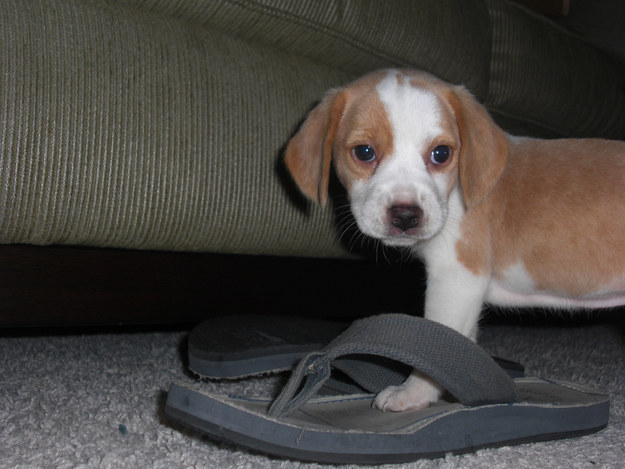 """""""I wasn't chewing on these, I just wanted to see if they were my size."""""""