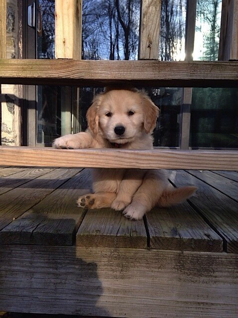 """""""Maybe I'll just hide here until she forgets that I peed all over the couch."""""""