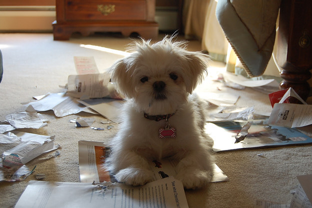"""""""Well, these were in the trash, so I thought it wouldn't matter if I chewed 'em up."""""""