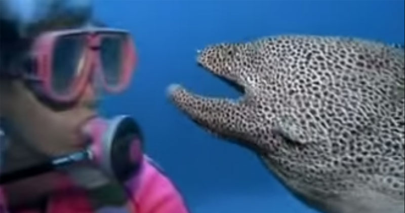 Rare Footage of a Spotted Moray Eel Befriending a Diver