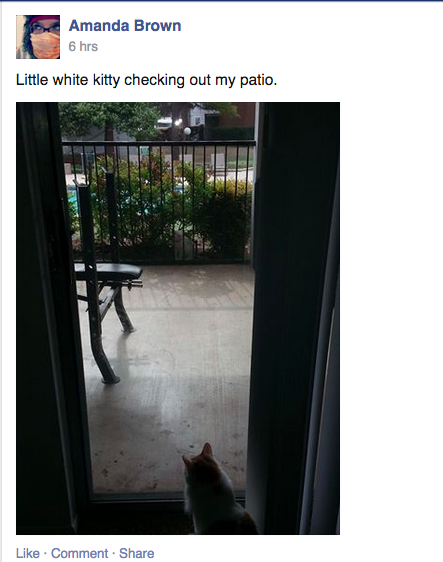 "Rule: no ""known cats"". This looks like it's probably her own cat, which is a BAD CATSPOT!"