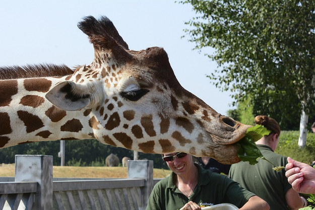 Spend a magical day hanging out with the animals at Colchester Zoo