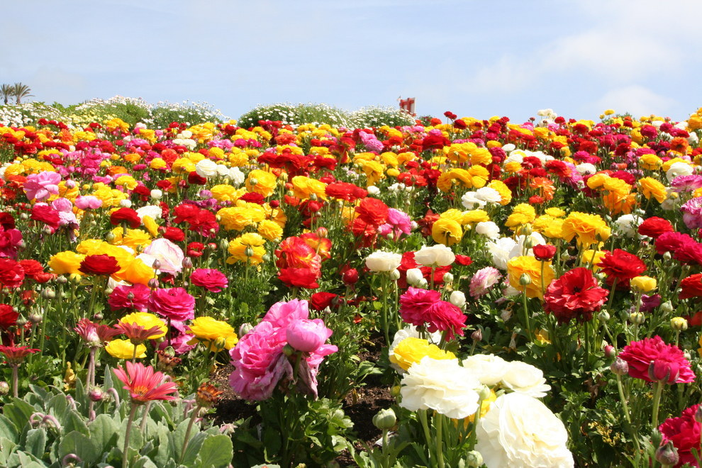 13 Beautiful Fields Of Flowers Around The World