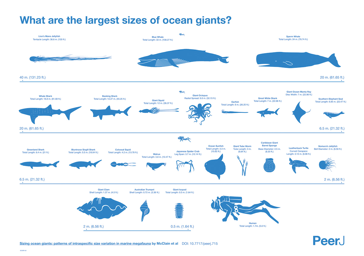 The Largest Creatures in the Ocean [Chart]