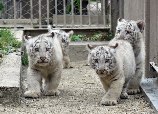 Their names haven't yet been announced, but these cubs look ready for their close-up.