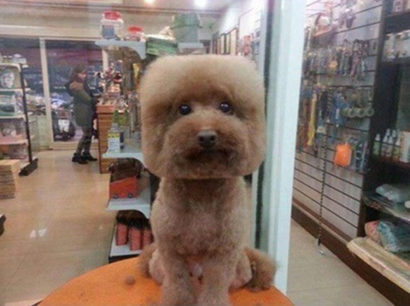 There's A New Trend To Give Dogs Perfectly Round Or Square Haircuts