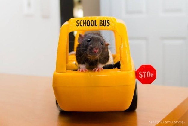 19 Reasons Rats Are The Absolute Worst