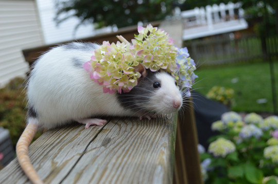 They will take all of your beautiful flowers and make them into flower crowns, and you just cannot have that happen.