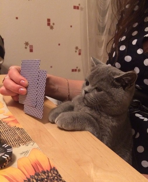 This cat who is about to own everyone in this poker game.