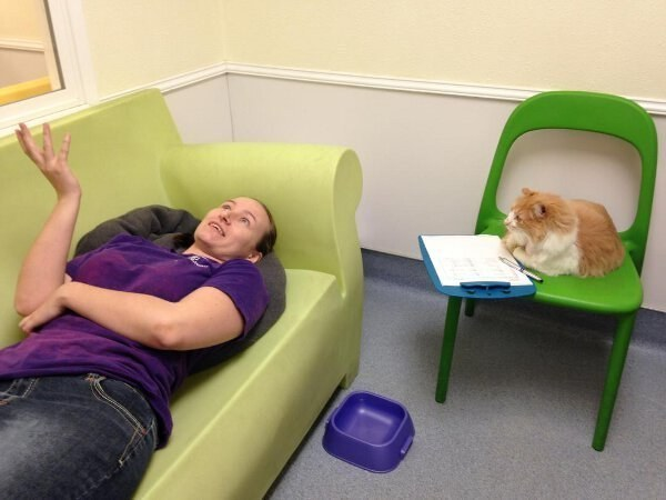 This cat who is passing herself off as a qualified medical professional.