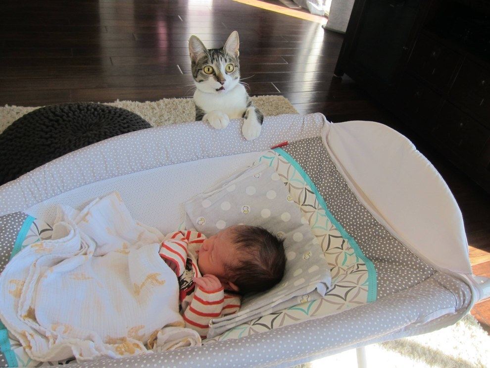 This Couple Forgot To Tell Their Cat They'd Had A Baby