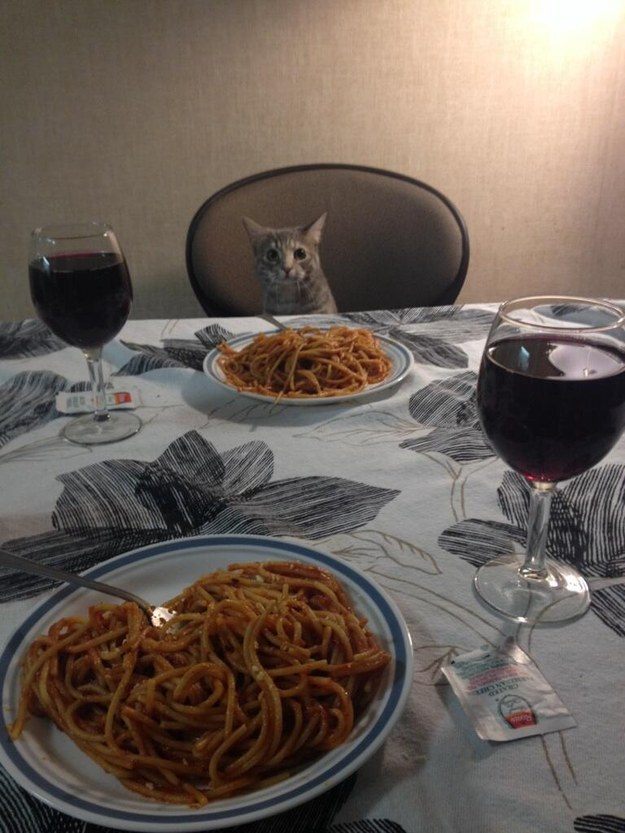 This gentleman who is a better dinner date than any human ever.