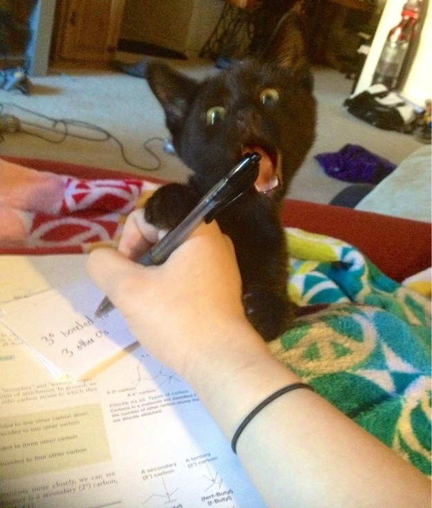 This little kitten who NEEDS TO NOT WITH THE WRITING UTENSILS.