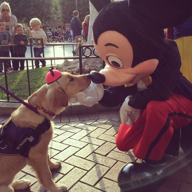 42 Adorable Pictures To Get You Through Finals Week