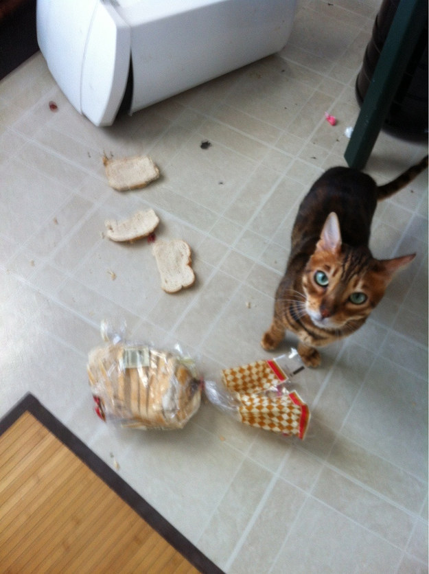 This troublemaker who thought it was fine to destroy perfectly good bread.