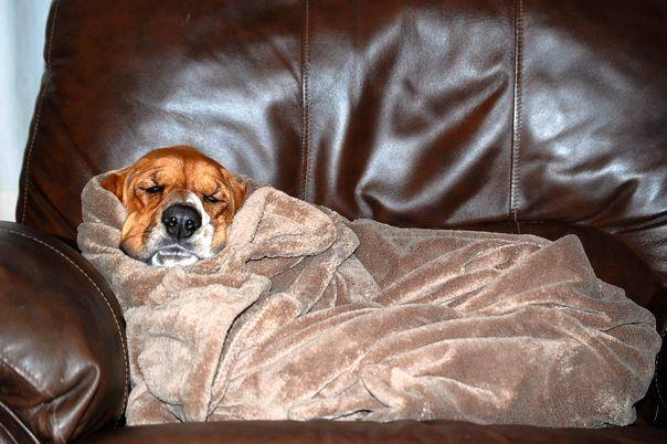 When this snuggler made himself into a blanket burrito and got stuck.