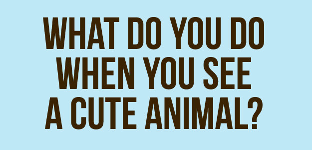 Which Tiny Little Animal Are You