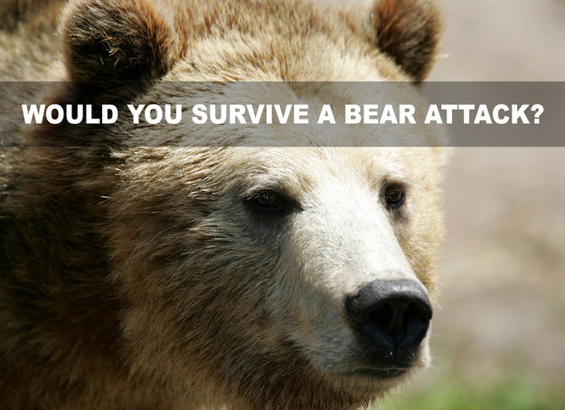 Would You Survive A Bear Attack