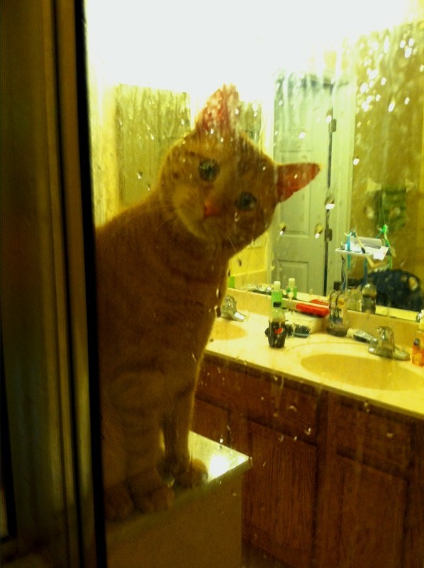 You are never alone, not even in the shower.