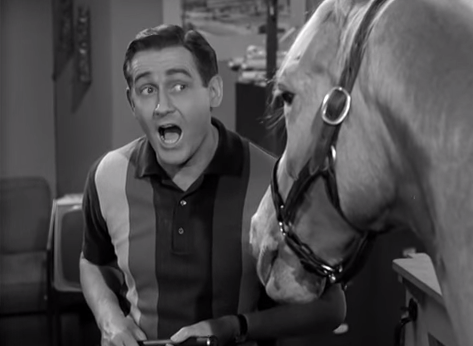 "You just assumed ""Mr. Ed"" was about a middle class man's slow descent into madness."