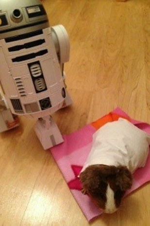 """21 Animals Celebrating """"Star Wars Day"""" The Right Way"""