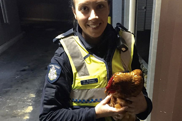 A Chicken Legit Tried To Cross The Road And It Was Cock Blocked By Police
