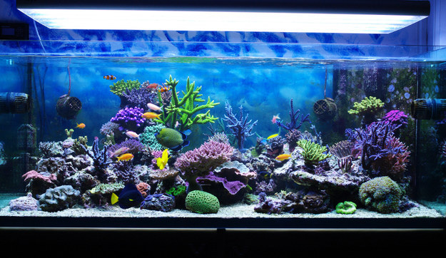 Aquariums get too hot during the summer, so keep checking to make sure the temperature is cool enough.