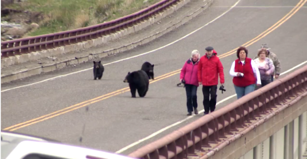 These Montana Tourists Most Probably Definitely Got Too Close To These Bears – BuzzFeed News