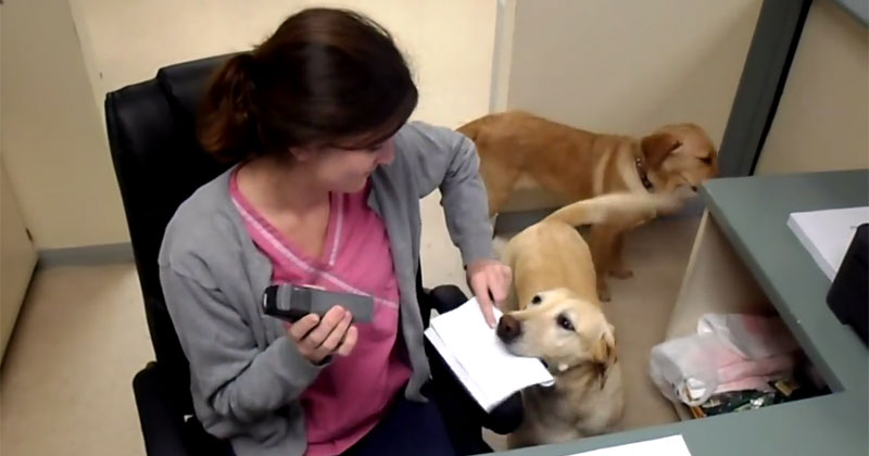 At This Vet Clinic, You Can Have a Dog Deliver Your Receipt
