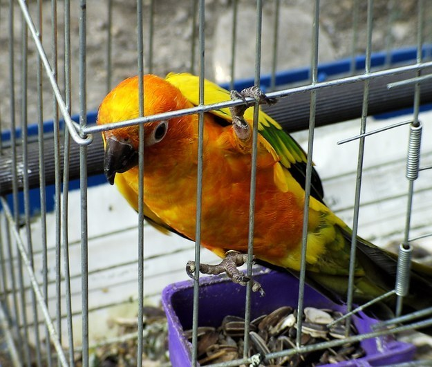 If you own birds, make sure their cage isn't near a sunny area.